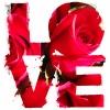Rose love (100x100)