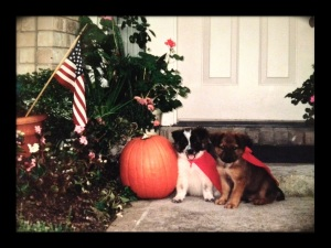 Bucko & Mac wait for trick-or-treaters