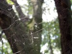 This torn web reflects the fierce struggles of the spider's victims