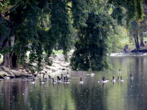 We did see a gaggle of geese in a nearby river