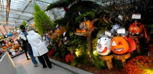 Decorated pumpkins take over the Botanical Garden greenhouse!